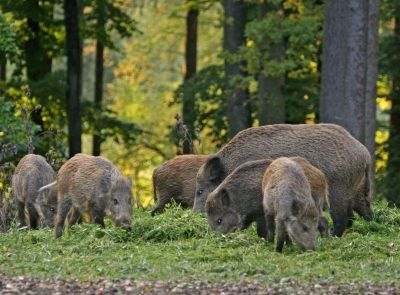 Откриване на ловен сезон за едър дивеч 2016-2017 1